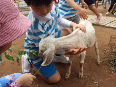 Cha Mẹ Thông Thái (số 12): Danh sách kỹ năng Tiền Tiểu học